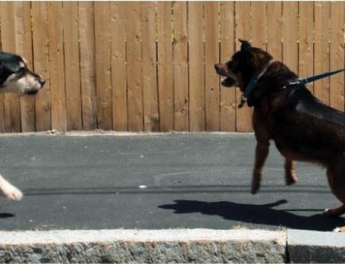 Hond-hond agressie: Agressie tegen onbekende honden