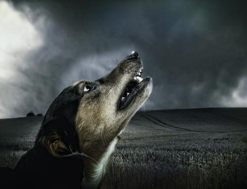 Stress herkennen bij een hond
