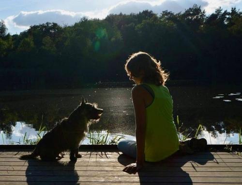 Een hond met ADHD; een (dikke) gebruiksaanwijzing