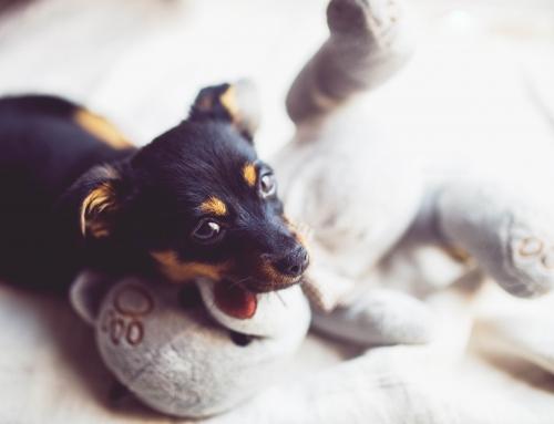 5 valkuilen bij het aanleren van de naam van je puppy