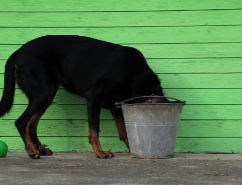 Hoe stop je ongewenst gedrag bij je hond?