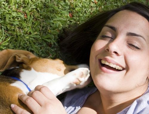 Top 10 belangrijkste dingen die een pup moet leren
