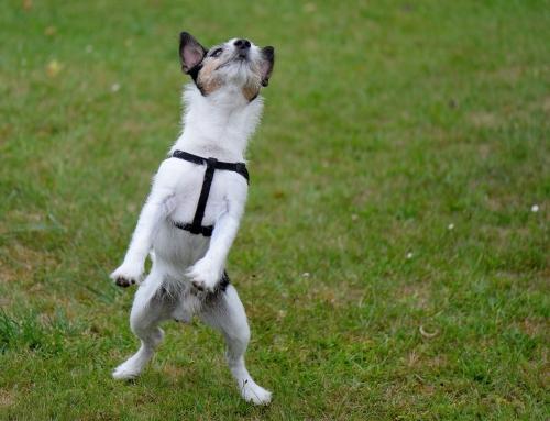 Vraag en Antwoord: hond en kind