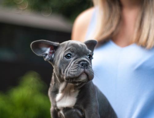 Wat je NIET nodig hebt voor je pup