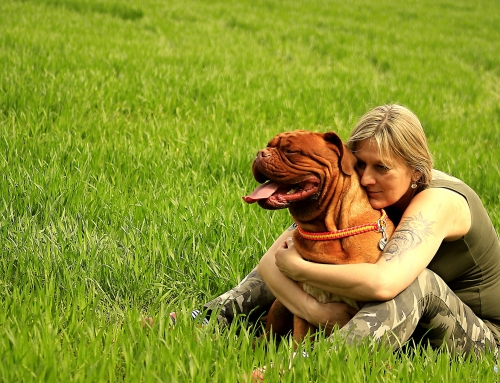 Vinden honden aaien en knuffelen fijn?