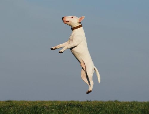 15 dingen die je kunt doen om je hond moe te maken