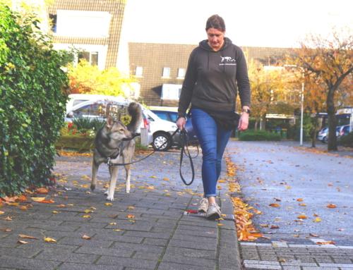 Wandelen, zonder hond??