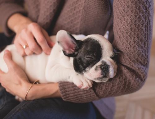 Een puppy die niet wil lopen; koppig, eigenwijs of …?